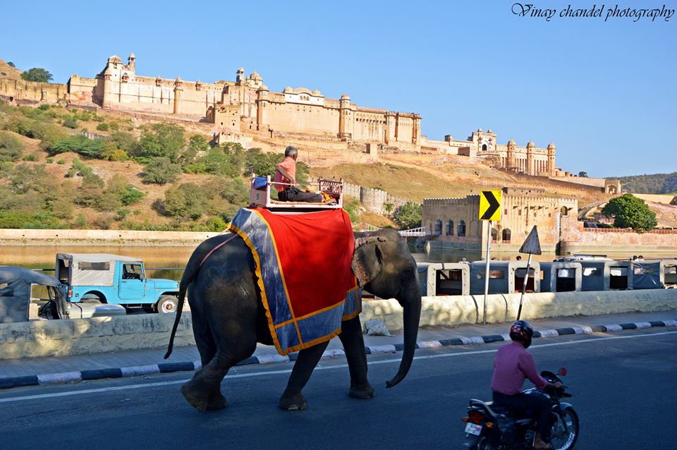 Enjoy elephant ride